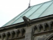 Gargoyle on north roofline. Image: Kirsty Owen (May 2007).  Image ID: s4692_07.JPG